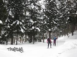 雪道散歩250