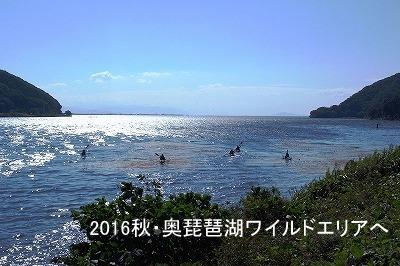 400奥琵琶湖ワイルドエリア