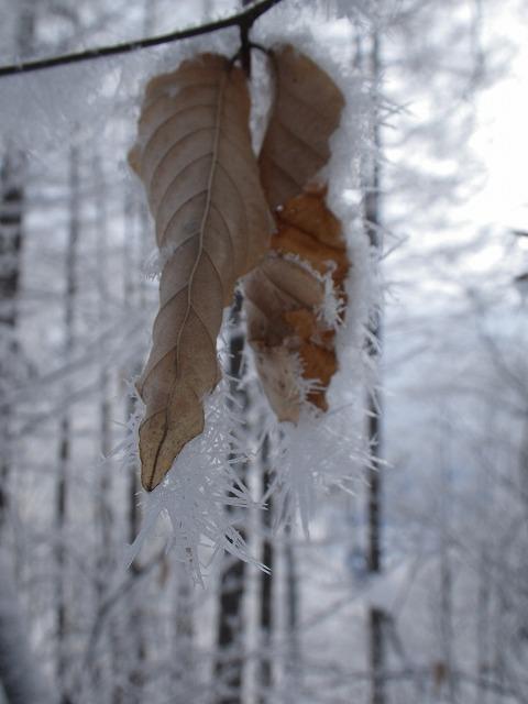 凍てつく季節